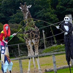nightmare before christmas themed stilt walkers