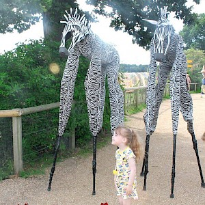 4 legged zebra stilt walkers